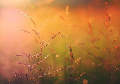 In nur 30 Sekunden entspannen, auftanken und wieder gestärkt im Tag weitergehen? Klingt zu schön, um wahr zu sein? Dann probiere diese Mini Meditation. Je öfter Du sie übst, desto leichter wird es.